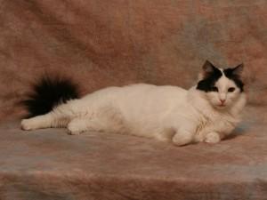 Rüya Kedi Marmaris'den
